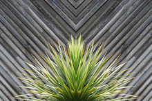 Yucca Or Cactus Plant Abstract...