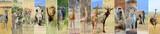Fototapeta Zwierzęta - Collage of african wildlife animal