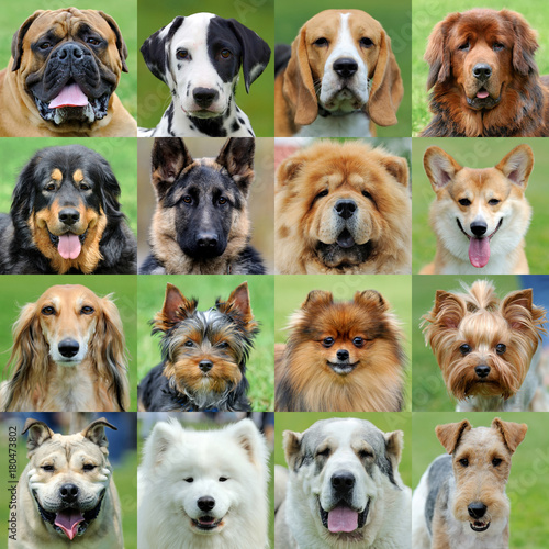 Photo Collage of different dogs