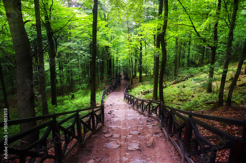 Foto op Canvas Weg in bos Downhill path through the forest