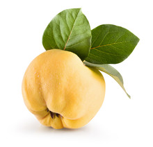 Quince Isolated On A White Bac...