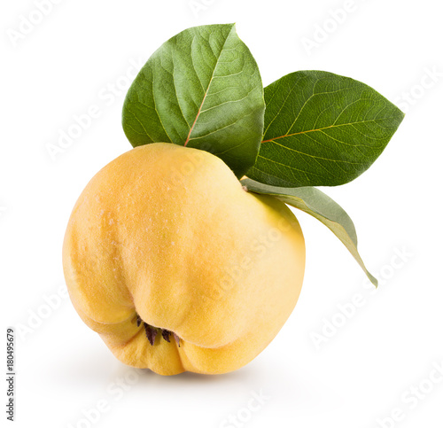quince isolated on a white background Poster Mural XXL