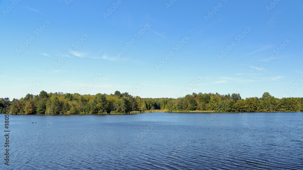 Fototapeta Trees on the shore of a blue lake in late summer