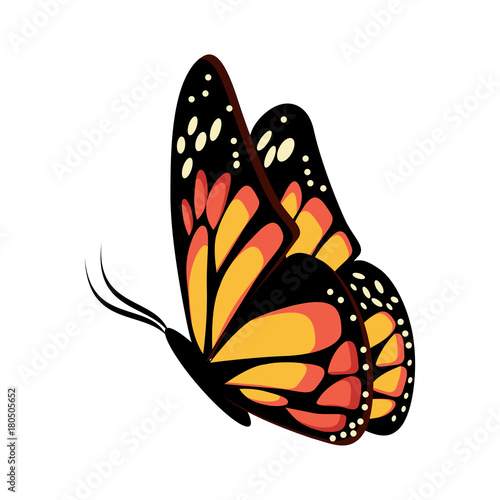 Beautiful yellow and orange sitting or flying butterfly Monarch. Wallpaper Mural