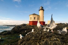 Seagull Party At A Lighthouse On The Oregon Coast