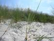 Dünen auf der Insel Hiddensee, Rügen