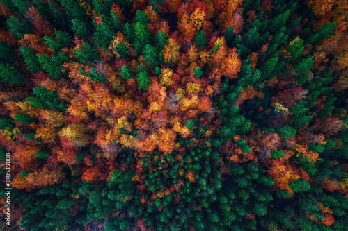 Valokuva  Aerial view over autumn forest landscape