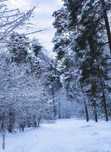 view seasonal natural january february cloudy sky light pine