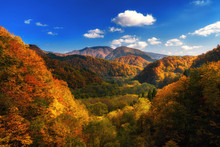 Autumn Colorful Mountain In To...