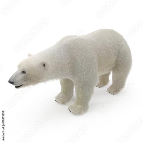 Acrylic Prints Polar bear Large male Polar Bear on a white. 3D illustration