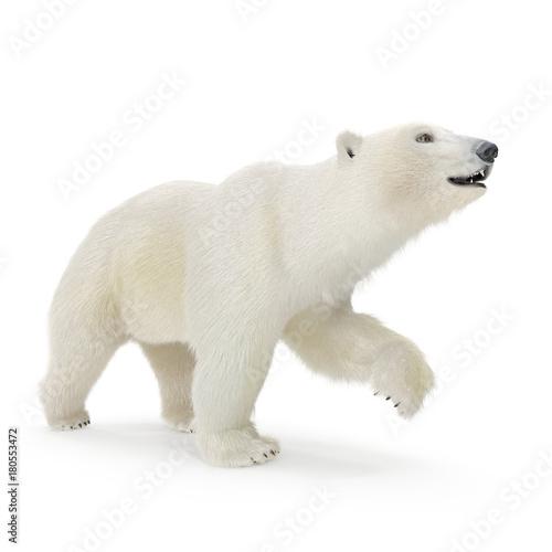 Wall Murals Polar bear Large male Polar bear walking on a white. 3D illustration
