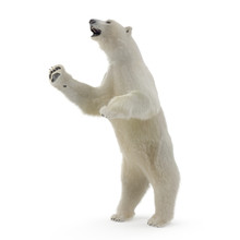 Large Male White Bear Standing...