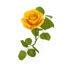 Single Beautiful Yellow Rose I...