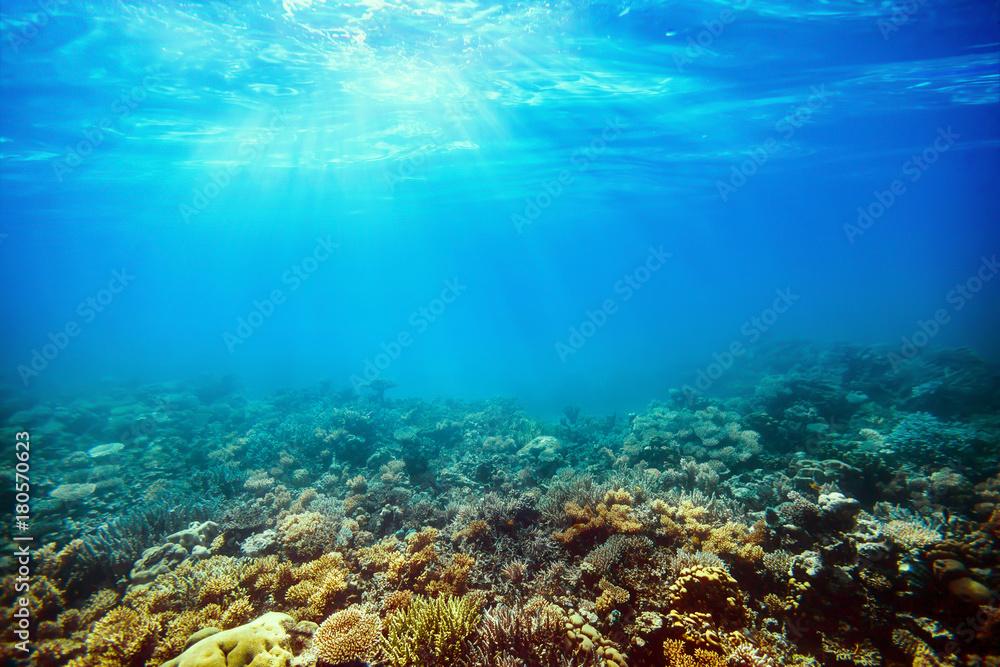 Fototapeta Underwater coral reef on the red sea