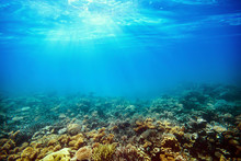 Underwater Coral Reef On The R...