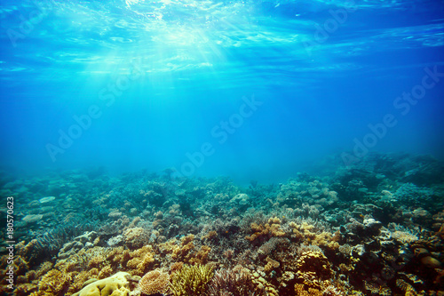 Staande foto Koraalriffen Underwater coral reef on the red sea