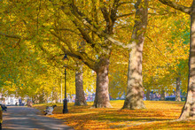 Avenue Lined With Trees In Green Park Of London
