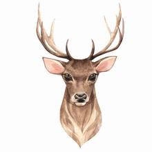 Noble Deer. Watercolor Illustr...