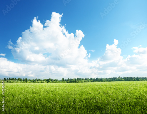 field of grass and perfect sky Wall mural