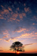 Sunset clouds and sky with dry tree