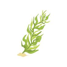 Illustration Of Green Seaweed ...
