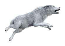 3D Rendering Arctic Wolf On Wh...
