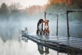 Fototapeta Dogs - Three dogs on a wooden pier