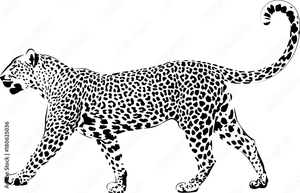 leopard ausmalbilder zum ausdrucken  kinder ausmalbilder