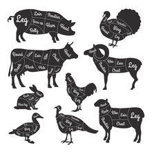 Illustrations For Butcher Shop...