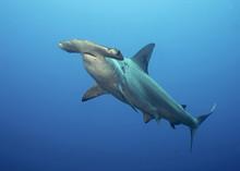 Galapagos, The Pinnacle Of Div...