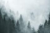 Fantazja mgłowy las w ranek mgle. Zdjęcie zostało zrobione w Słowenii, UE. - 180644045