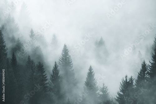 Fantasy foggy forest in the morning fog Canvas Print