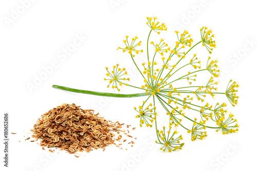 Foto auf Leinwand Kräuter Green wild fennel flowers with dry seeds isolated