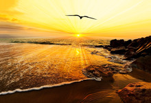 Sunset Ocean Bird Silhouette