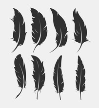 Set Of Old Feather For Writing