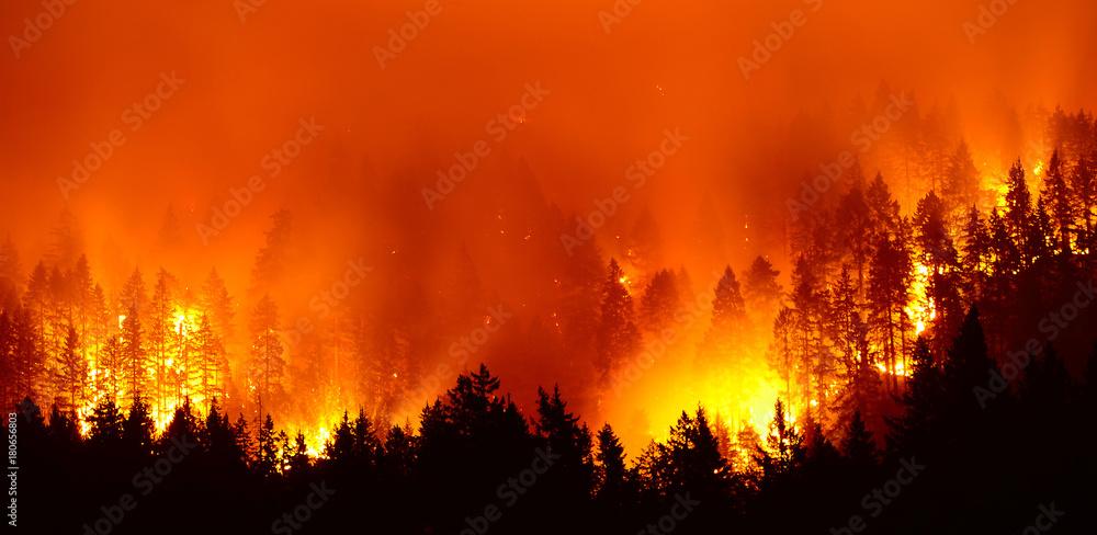 Fototapeta Forest fire