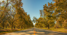 Pecan Tree Lined Street Southe...