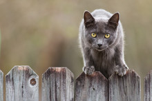 Stray Cat With Grey Fur On A F...