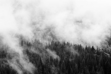 FototapetaSummer mountain landscape in black and white. Forest under clouds after rain. Traveling in Carpathians, Ukraine