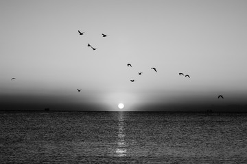 Fototapeta Czarno-Białe Autumn seascape at dawn in black and white. Flock of seagulls flying over sea. Silhouette of birds in flight. Rising sun above horizon.