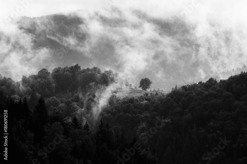 Spoed Foto op Canvas Grijze traf. Summer mountain landscape in black and white. Forest under clouds after rain. Traveling in Carpathians, Ukraine.