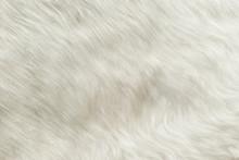 Texture: White Shaggy Skin Of An Animal Closeup