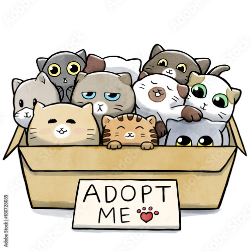 Photo Box full of cats for adoption
