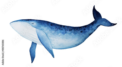 Fototapeta Blue whale watercolor illustration