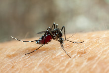 Dengue, Zika And Chikungunya F...