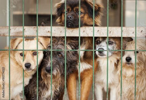 Perros en perrera Canvas Print