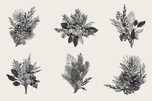 Winter Set. Floral Christmas Bouquets. Evergreen, Cone, Succulents, Flowers, Leaves, Berries. Botanical Vector Vintage Illustration. Black And White