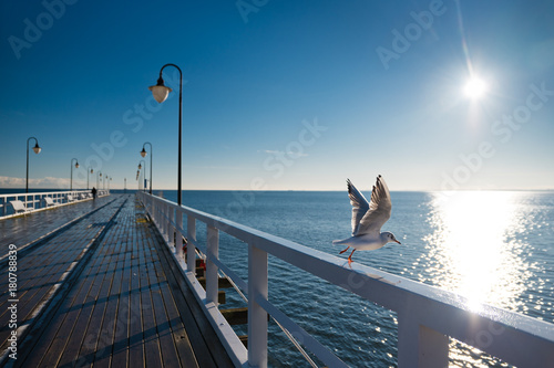 Seagulls starting fly from handrail at the Baltic Sea in Poland.
