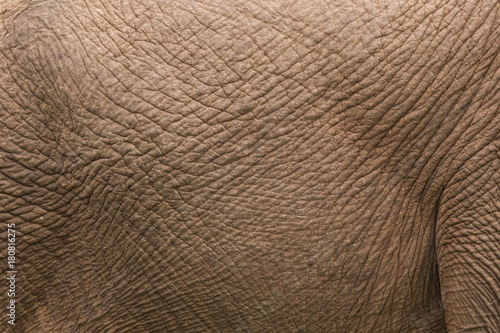 African elephant skin at close range Canvas Print