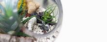 Terrarium With Plants And Hipp...